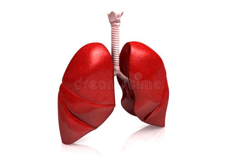 Download Human lungs stock illustration. Illustration of hospital - 26965765