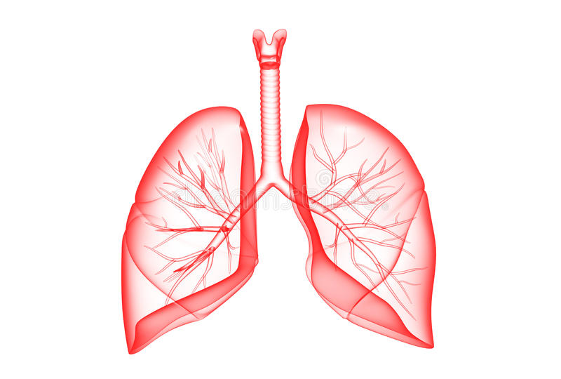 Download Human lungs stock illustration. Image of imagination - 26965843