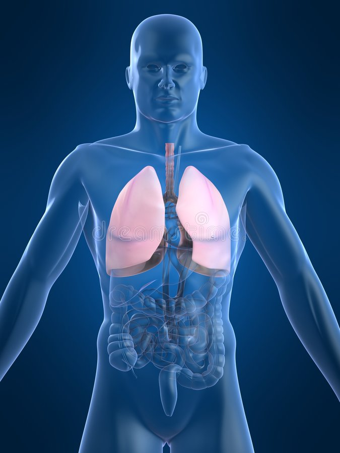 Human lungs. 3d rendered anatomy illustration of human organs stock illustration