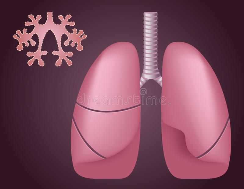 Human Lungs Alveoli Medical Science Anatomy Stock Vector