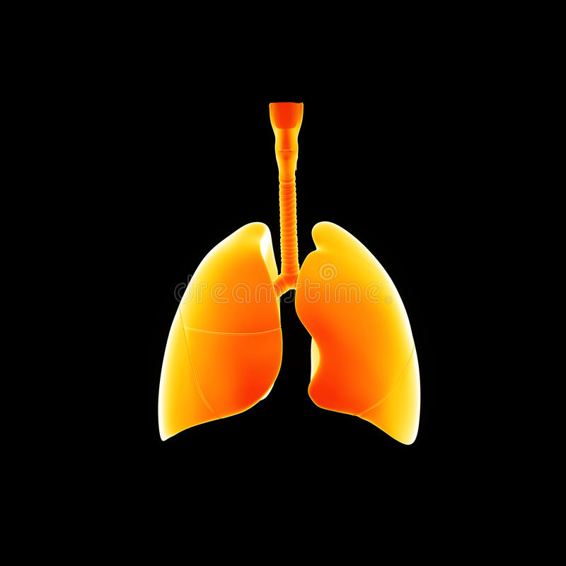 Human Lungs anterior view stock illustration
