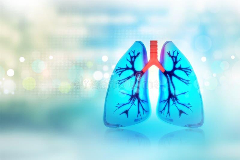 Human lungs stock illustration