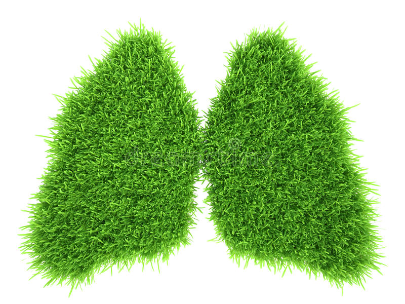 Human lungs in the form of green fresh grass.  stock photo