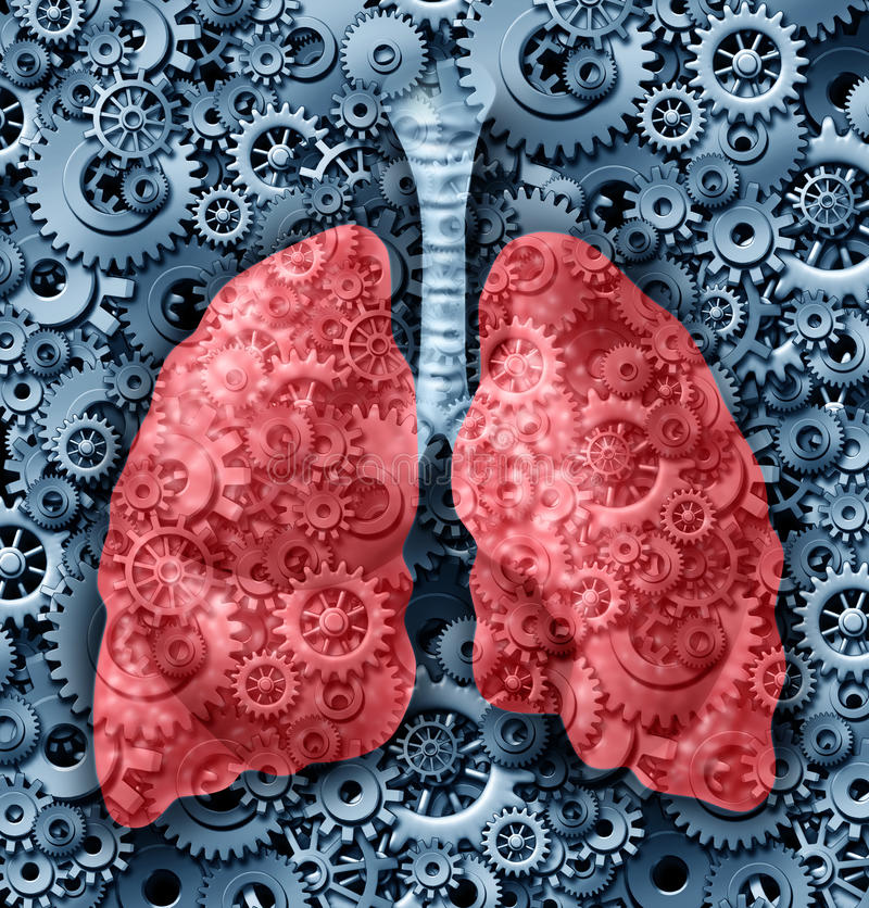 Free Human Lungs Function Royalty Free Stock Photos - 26526138
