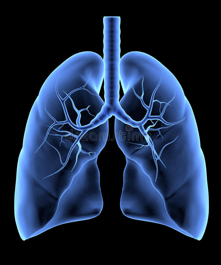 Download Human Lungs Royalty Free Stock Image - Image: 35319416