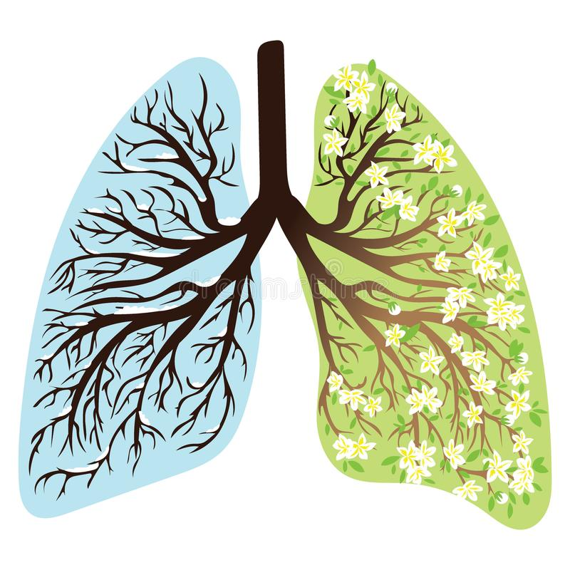 Human lungs. Respiratory system. Healthy lungs. Light in the form of a tree. Line art. Drawing by hand. Medicine. royalty free illustration