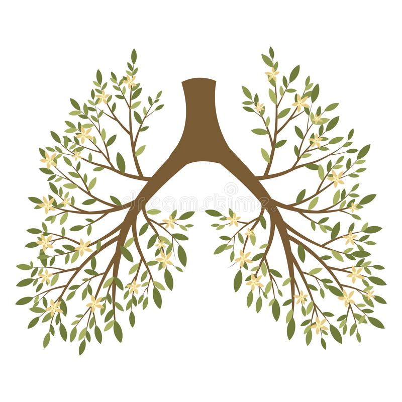 Human lungs. Respiratory system. Healthy lungs. Light in the form of a tree. Line art. Drawing by hand. Medicine. stock illustration