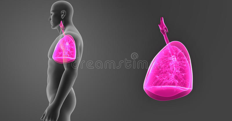 Human Lungs zoom with Body Lateral view vector illustration