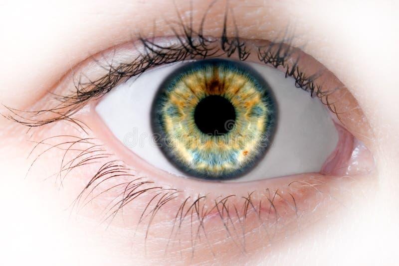 Human macro beauty eye royalty free stock photography