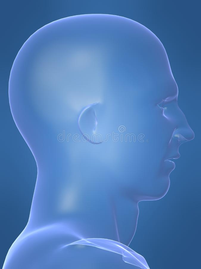 Human male shape royalty free stock images