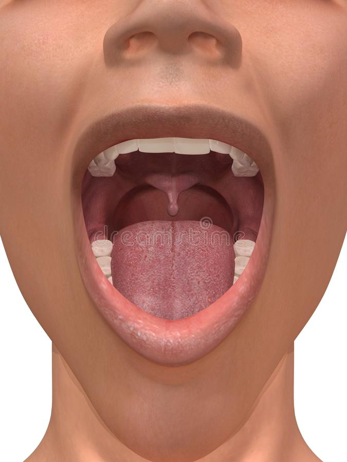 Download Human mouth stock illustration. Image of incisor, mouth - 14391841