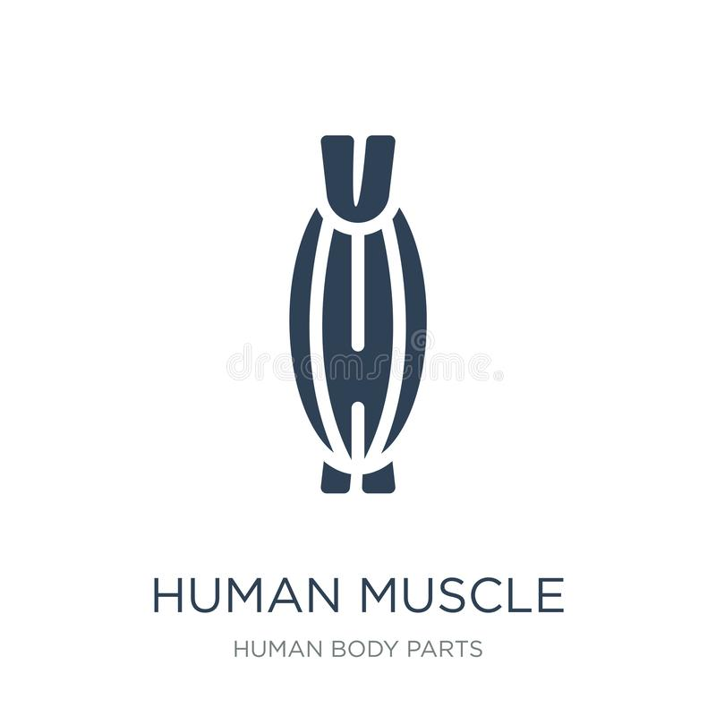 Human muscle icon in trendy design style. human muscle icon isolated on white background. human muscle vector icon simple and. Modern flat symbol for web site royalty free illustration