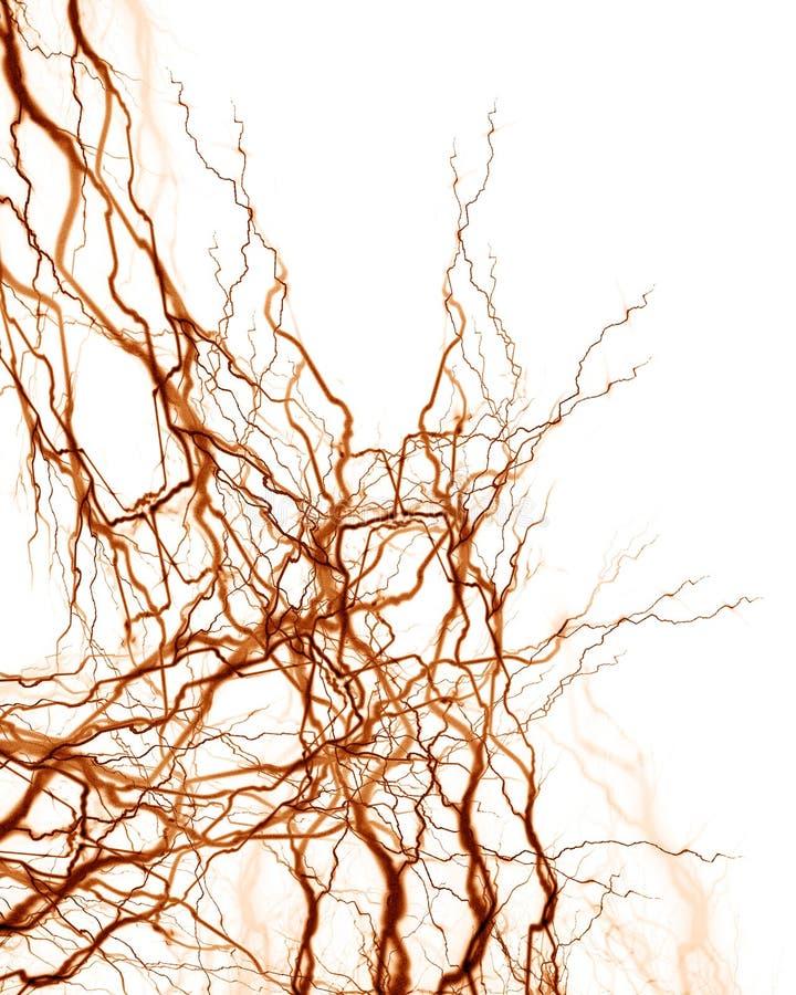 Human nerve system stock illustration