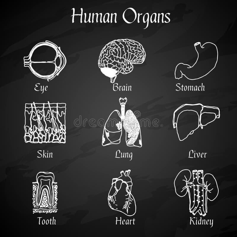 Human Organs Chalkboard Icons vector illustration