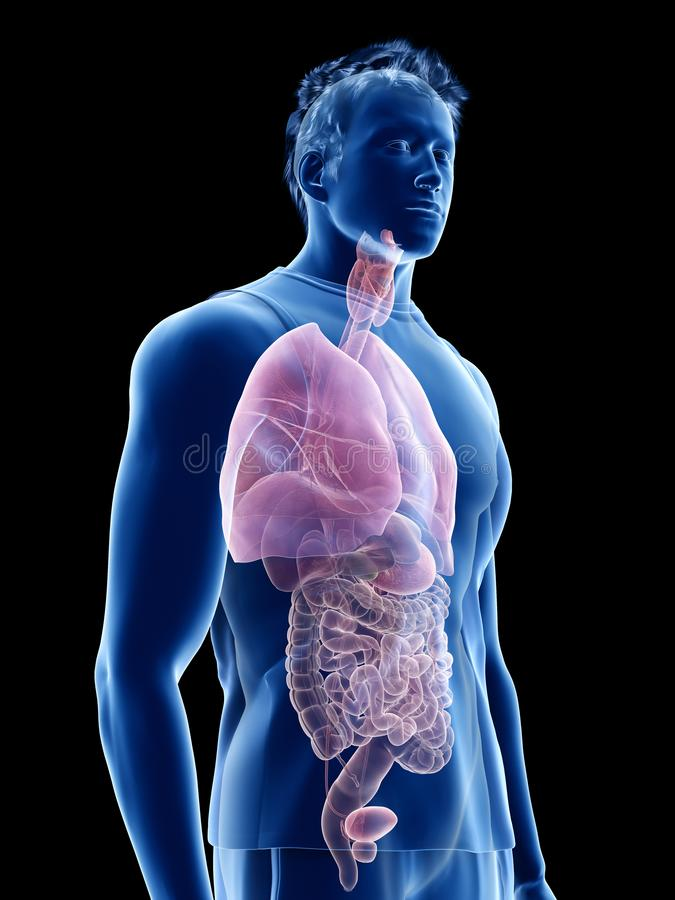 The human organs stock illustration