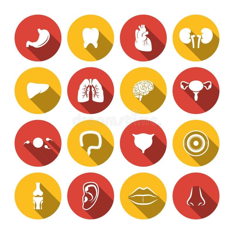 Human Organs Icons royalty free illustration