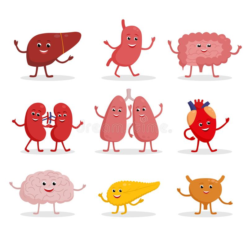 Human organs vector cartoon characters illustration in flat design. Cute smiling healthy organs icon set isolated on royalty free illustration