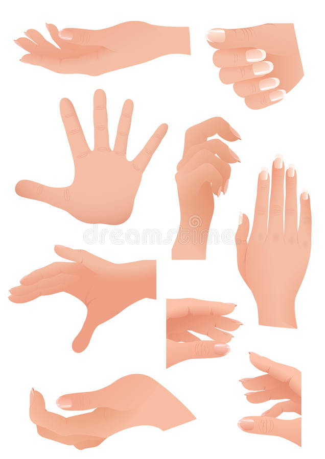 Download Human palm set stock vector. Image of hold, isolated - 13249125