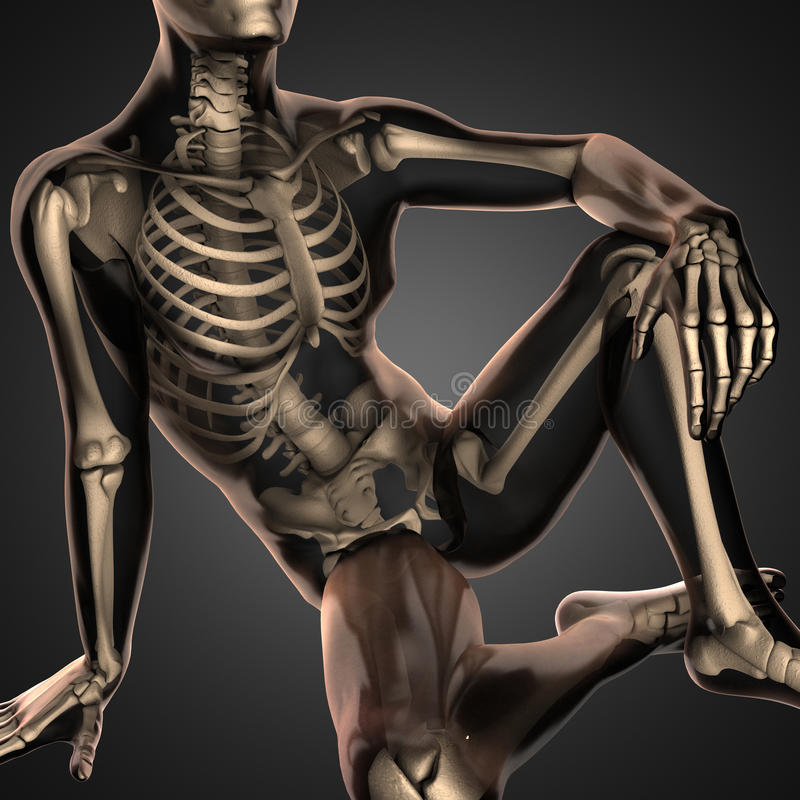 Human radiography scan with bones stock image