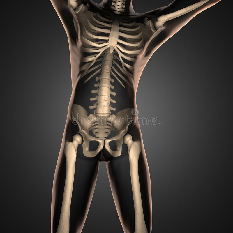 Human radiography scan with bones royalty free stock photography