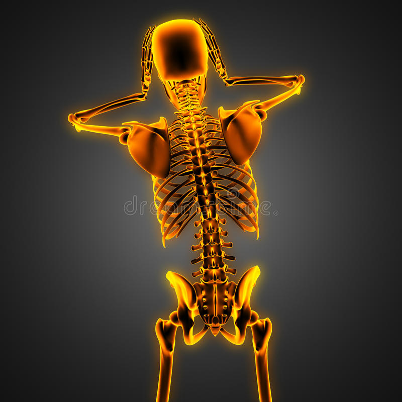 Human radiography scan with glowing bones royalty free stock photos