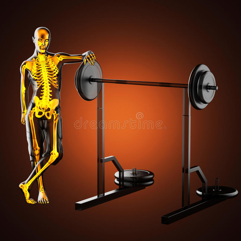 Download Human Radiography Scan In Gym Room Stock Illustration - Image: 27616697