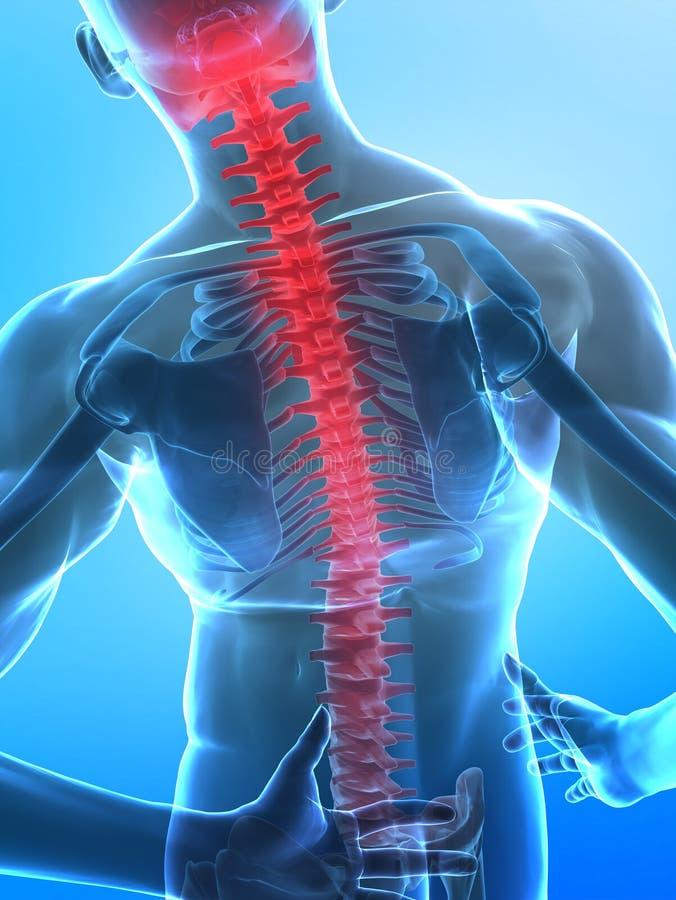 Human x-ray spine stock illustration
