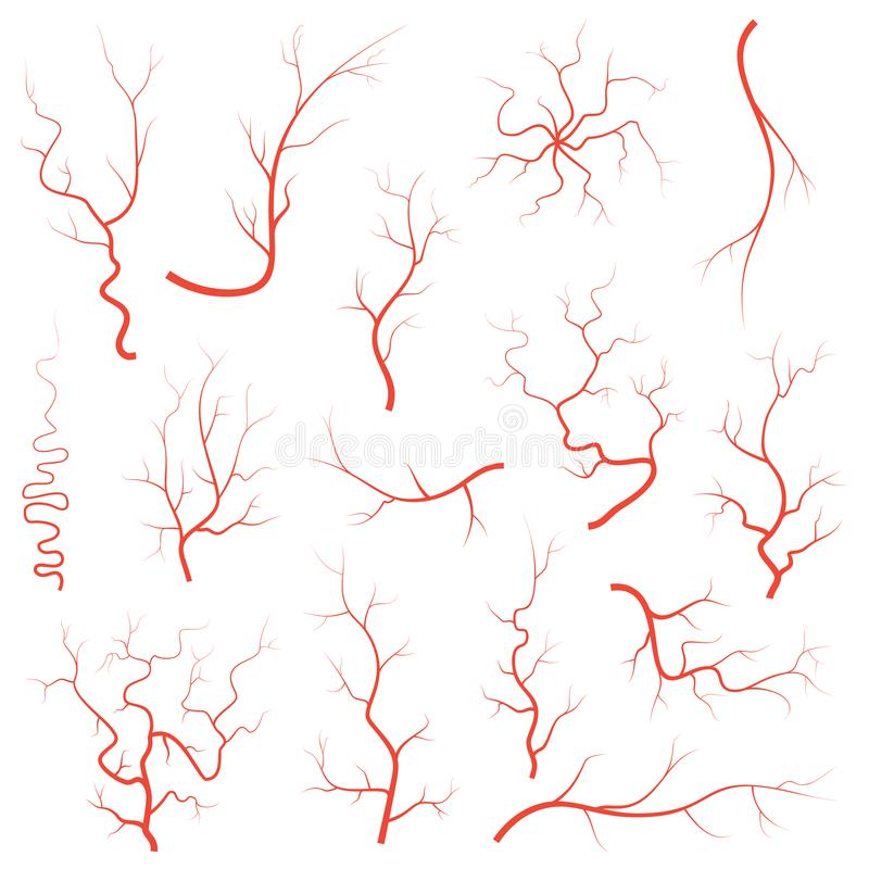 Human red eye veins set, anatomy blood vessel arteries illustration group. Vector medical eyeball vein arteries system royalty free illustration