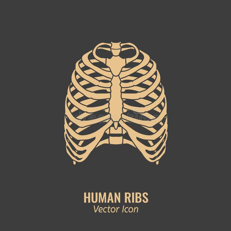 Human ribs icon. Chest image in a flat style. Vector illustration in beige colour isolated on a dark grey background vector illustration
