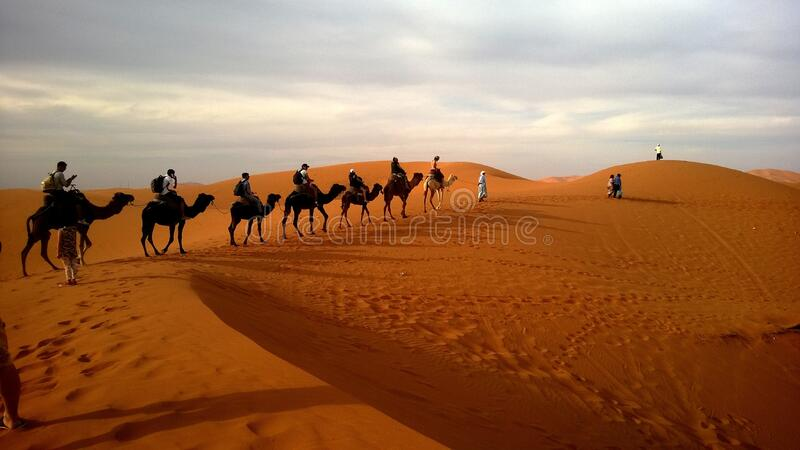 Human Riding Camel On Dessert Under White Sky During Daytime Free Public Domain Cc0 Image