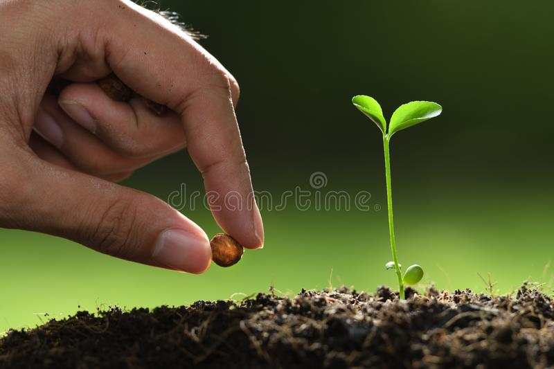 Human`s hand planting seeds in soil on nature. Background stock photography