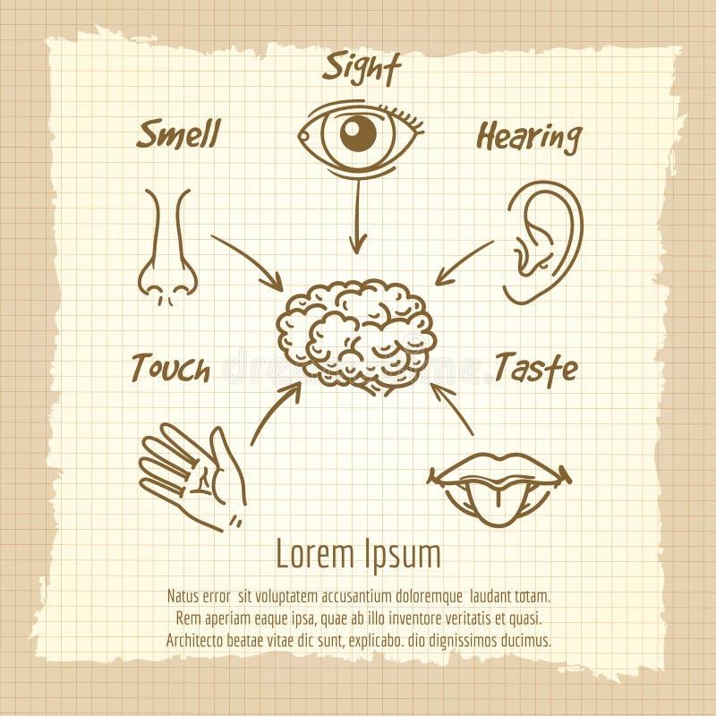 Human sense organs synopsis vintage poster vector illustration