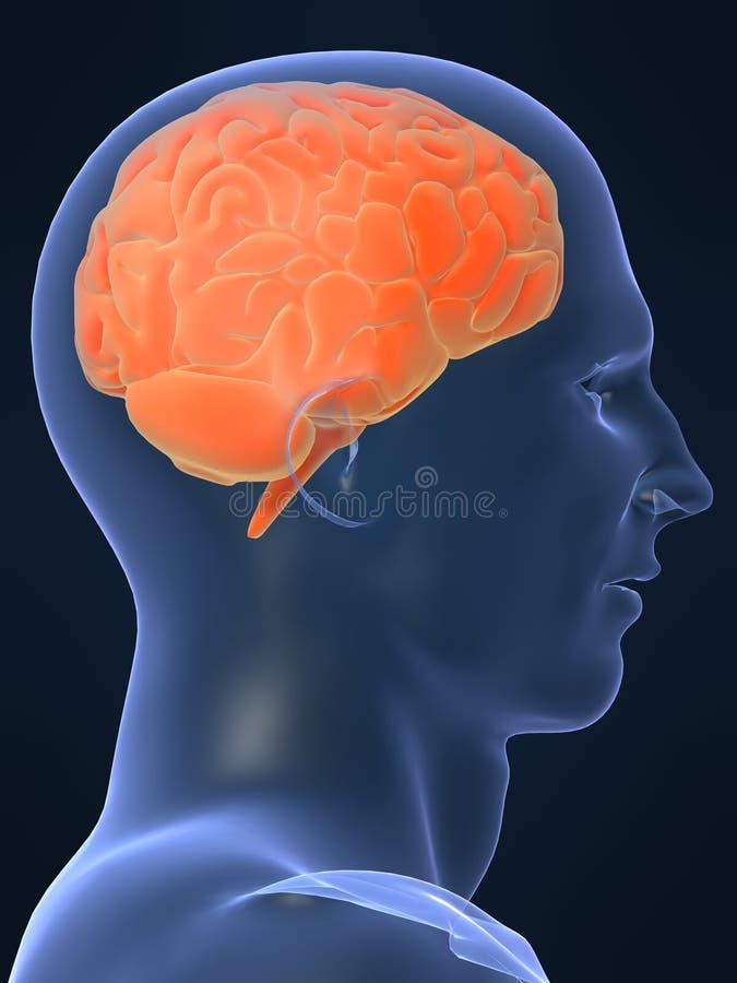 Human shape with brain vector illustration