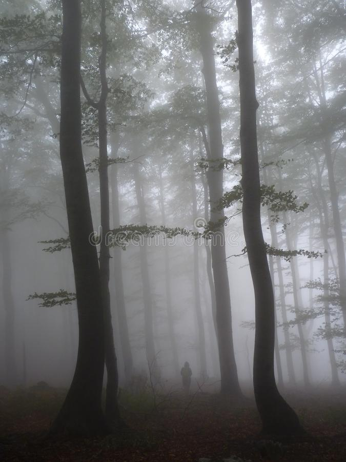 Might and magic in the woods royalty free stock photography