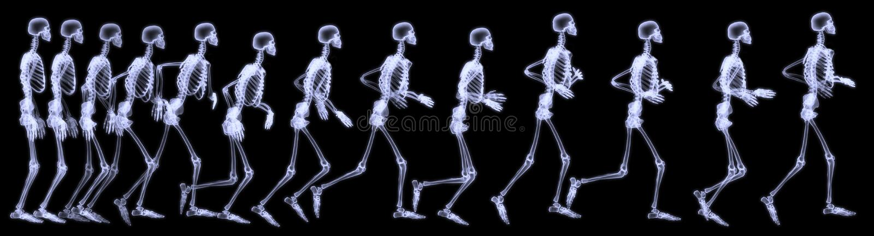 Human skelegon running. 3D rendering illustration, radiography of a human skelegon running stock illustration