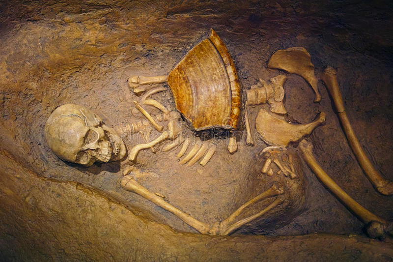 Human Skeletal Remains. That have been dug up from a shallow grave stock photo