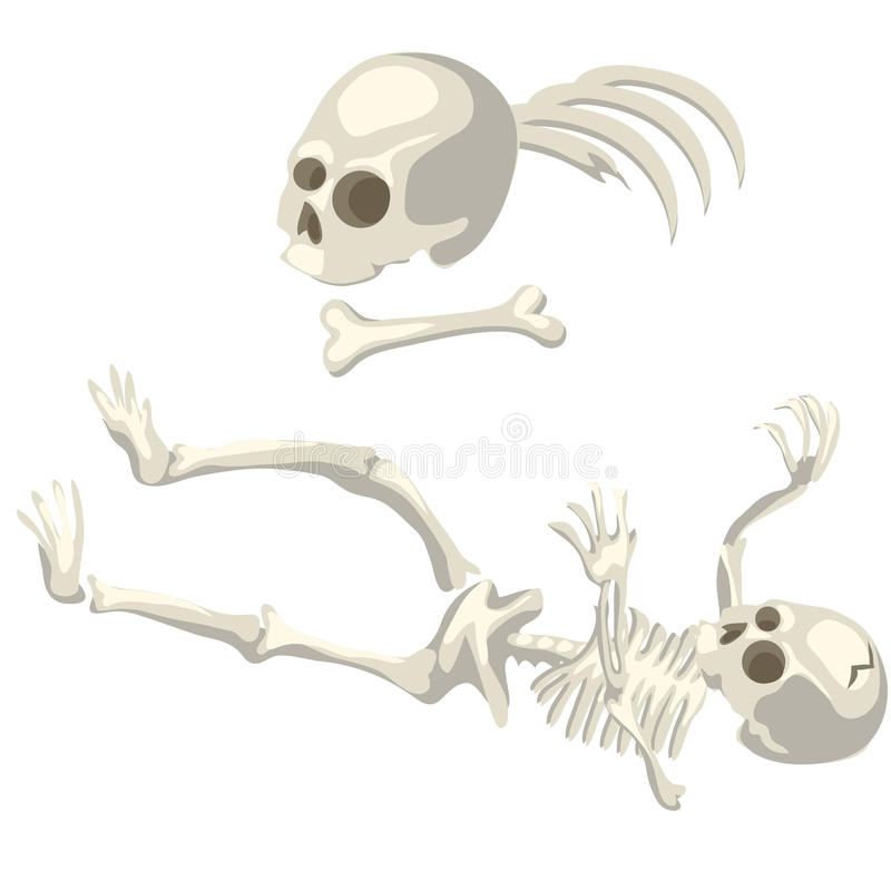 Human Skeleton And Bones Different Parts Of Body Stock Vector