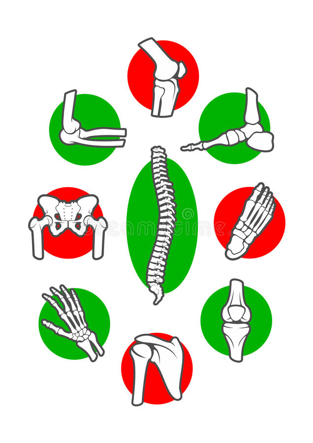 Human skeleton bones and joints icon set. Leg, hand, foot, knee, arm and spine, finger and elbow, pelvis and rib, shoulder and ankle, wrist and chest, hip and vector illustration