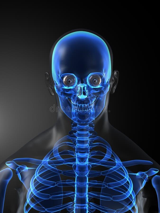 Human Skeleton Medical Scan stock illustration