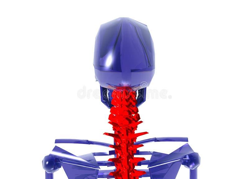 Human Skeleton over White Bad Neck. Blue glass Human Skeleton over White Bad Neck royalty free illustration