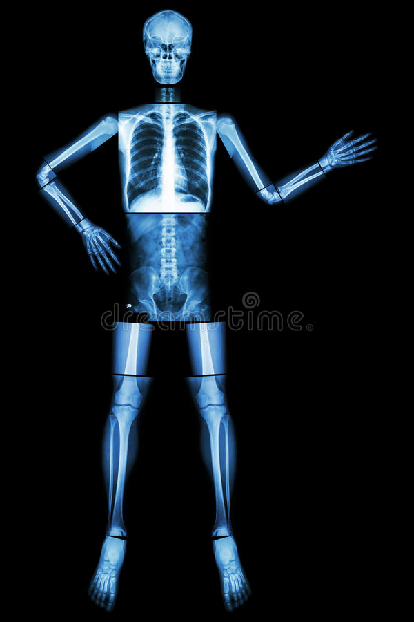 Human skeleton present something (Whole body : head skull neck spine shoulder arm elbow forearm wrist hand finger chest thorax. Heart lung abdomen back vertebra royalty free stock photography