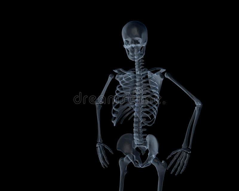 human skeleton xray stock illustration - image: 40423947, Skeleton