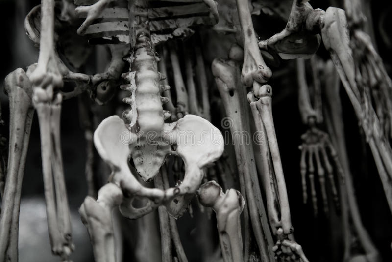 Human Skeletons Royalty Free Stock Photo