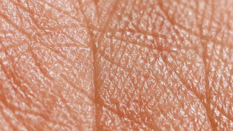 human skin macro stock photo image of care 55342084 human skin macro stock photo image of care 55342084