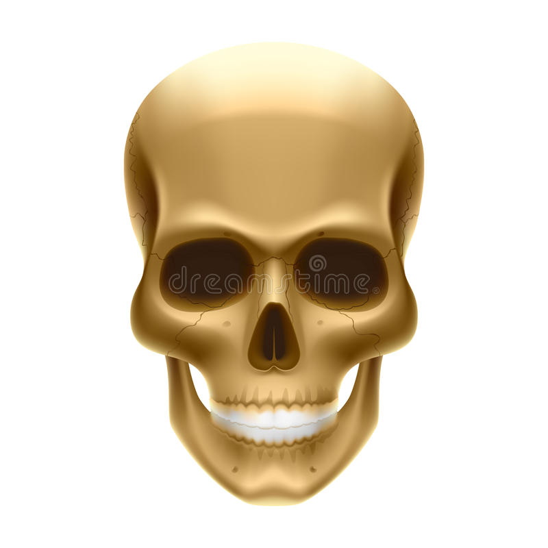Download Human skull stock vector. Illustration of halloween, pirate - 14090282