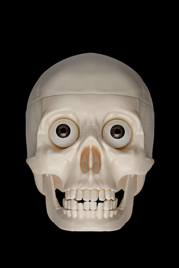 Download Human skull stock photo. Image of lighting, plastic, face - 16684592