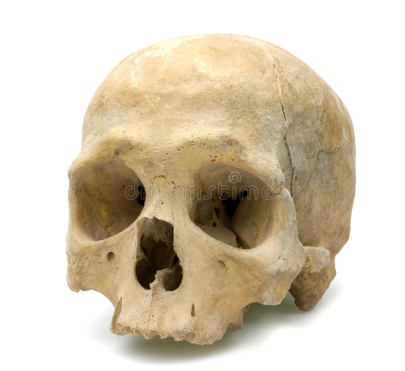 Human skull. Isolated on white stock images