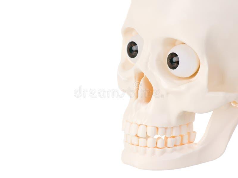 Download Human Skull Royalty Free Stock Photography - Image: 19378967