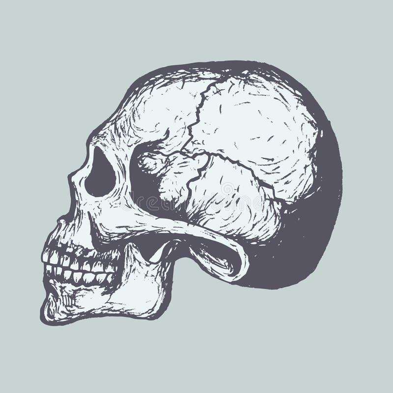 Human Skull. Sketch of Human Skull. Vector. Computer Graphics stock illustration