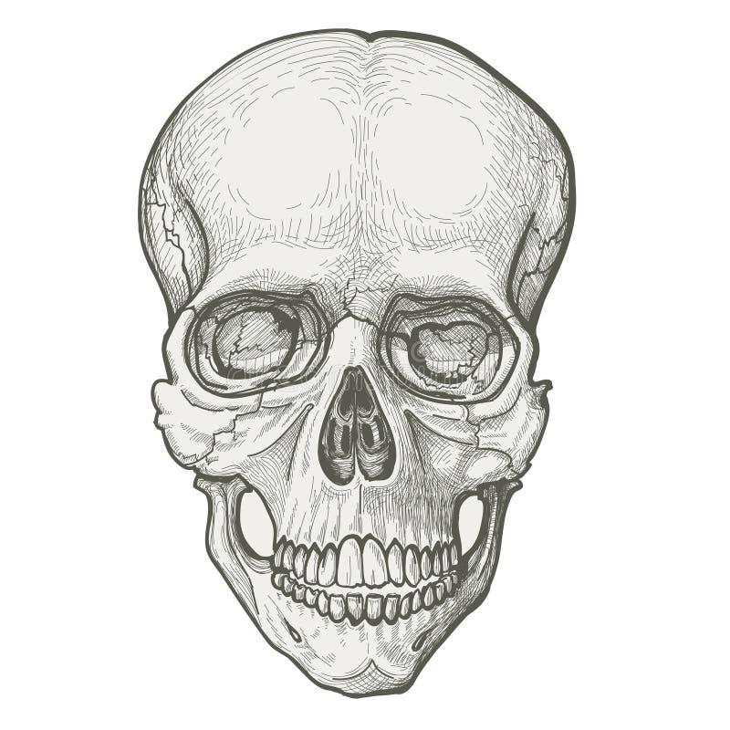 Download Human skull stock vector. Image of damaged, black, people - 21166122
